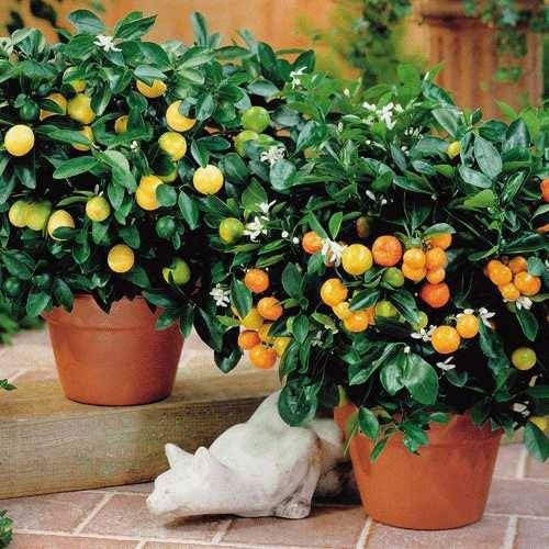 Какие цветы нужно держать дома? домашние растения