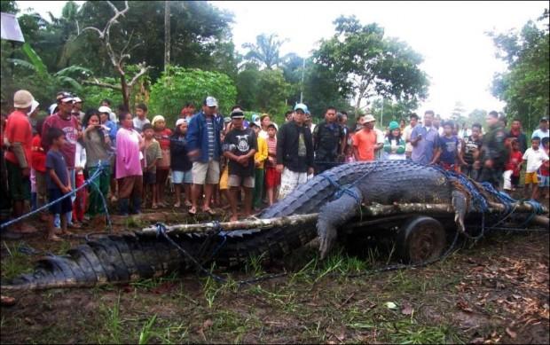 Филиппинцы поймали крупнейшего крокодила