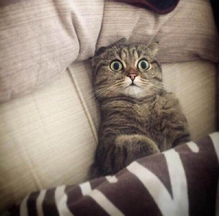 нас фото с котом про работу или узамбарская фиалка