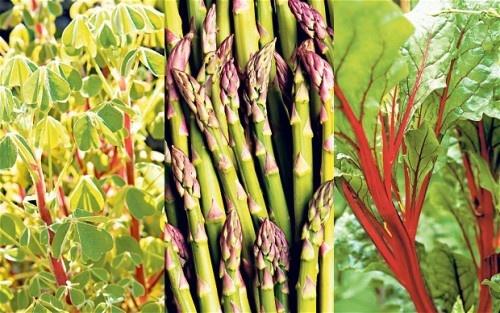 Шесть многолетних овощей, которые продолжают плодоносить, год за годом