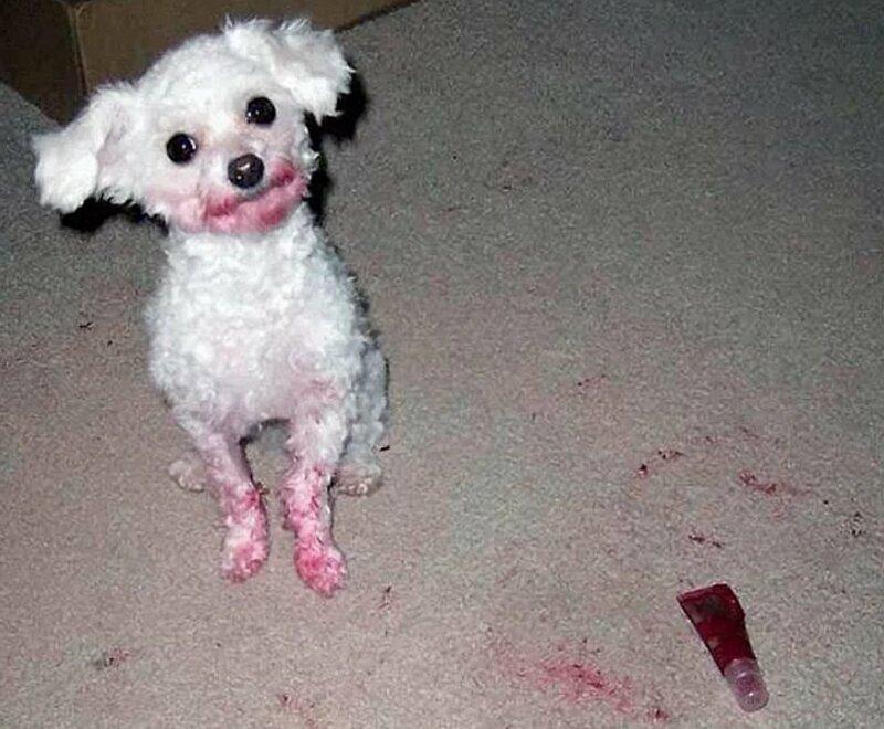 """""""Диор"""", говоришь... врасплох, кошки, смешные, собаки, фото, шкодники"""