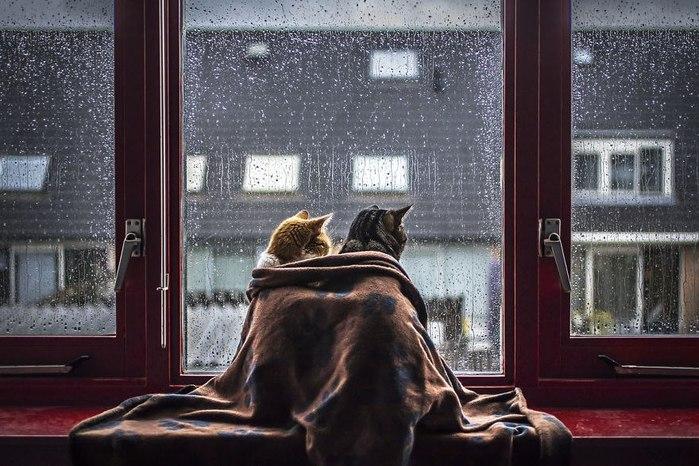 Оранжевый кот(Филатов-Кочан).avi