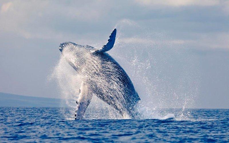Почему некоторые млекопитающие вернулись в воду загадка, парадокс, природа