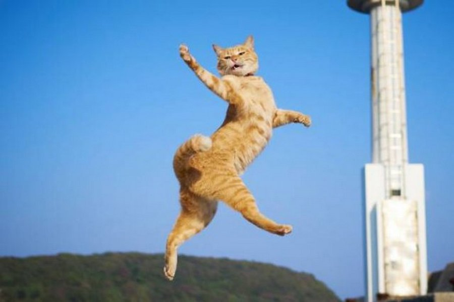 Позитивные и веселые фотографии с котиками для улыбки