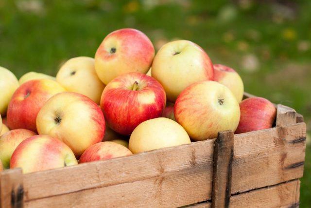 5 секретов длительного хранения яблок дача,сад и огород,урожай