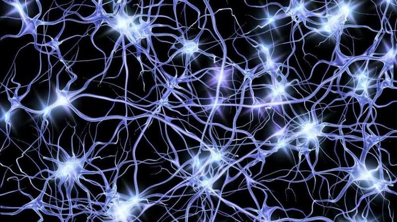 Структура нейронов в мозге похожа на структуру Вселенной интересно, познавательно, тело, факты