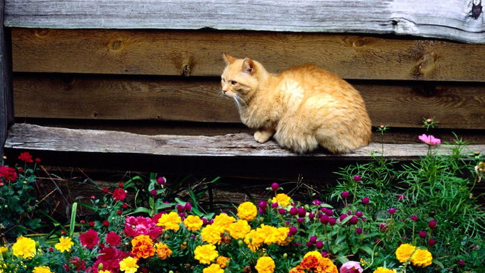 Минутка позитива: Котэ на даче дача,животные,кошки,позитив