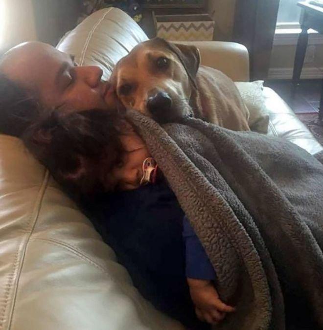 У малышки высокая температура и собака знает об этом. животные, собаки, это интересно