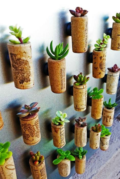 Украсть стену в комнате можно с помощью миниатюрных горшочков, сделанных из винных пробок с суккулентами.