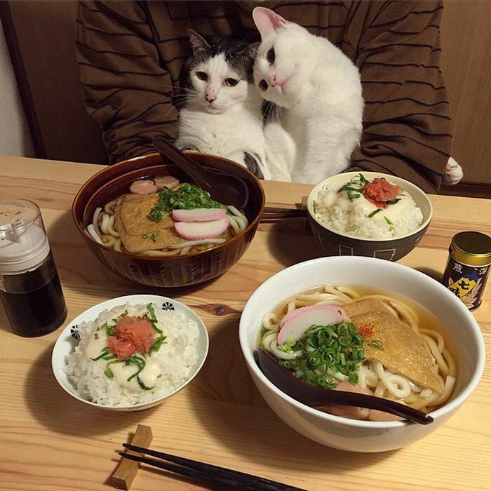 Игра что любит кошка на обед