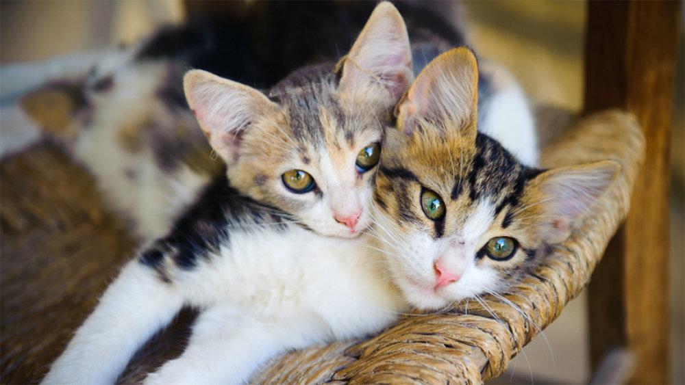 Ролик с вежливыми котами из …