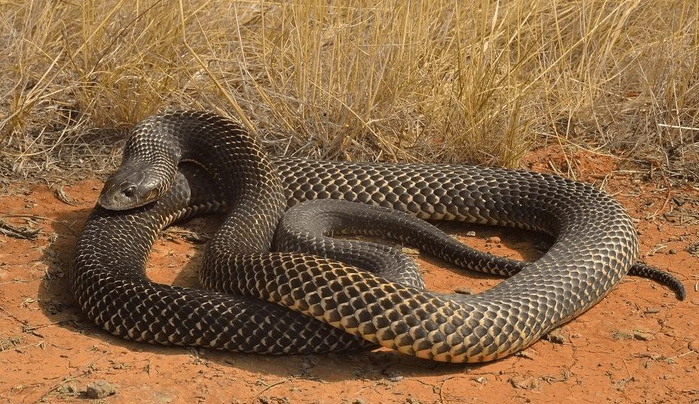 Топ-10 самых длинных змей в мире – невероятные рекордсмены