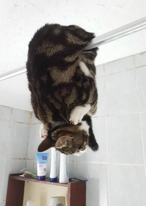 17 фотодоказательств того, что наши коты – пришельцы