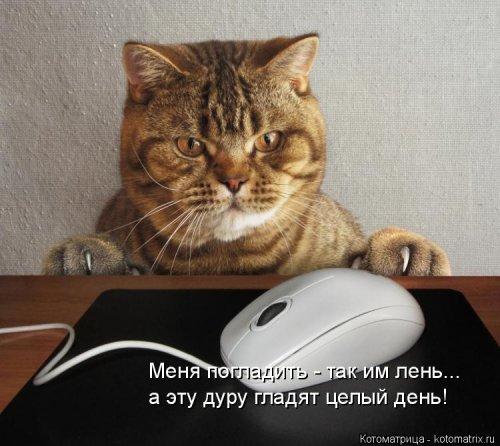 СМЕШНАЯ ПЯТНИЦА. Котоматрица