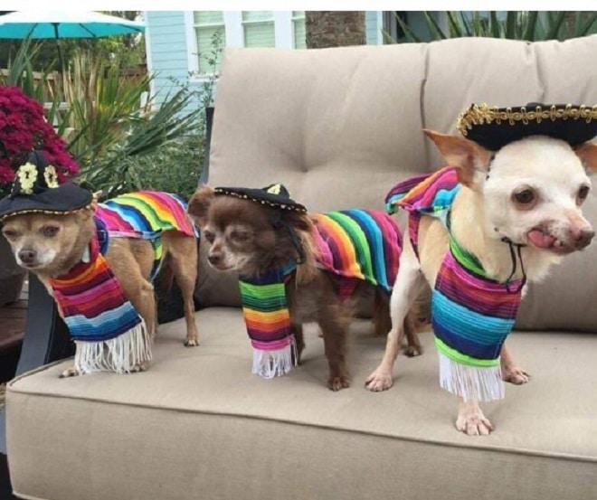 Собаки в костюмах