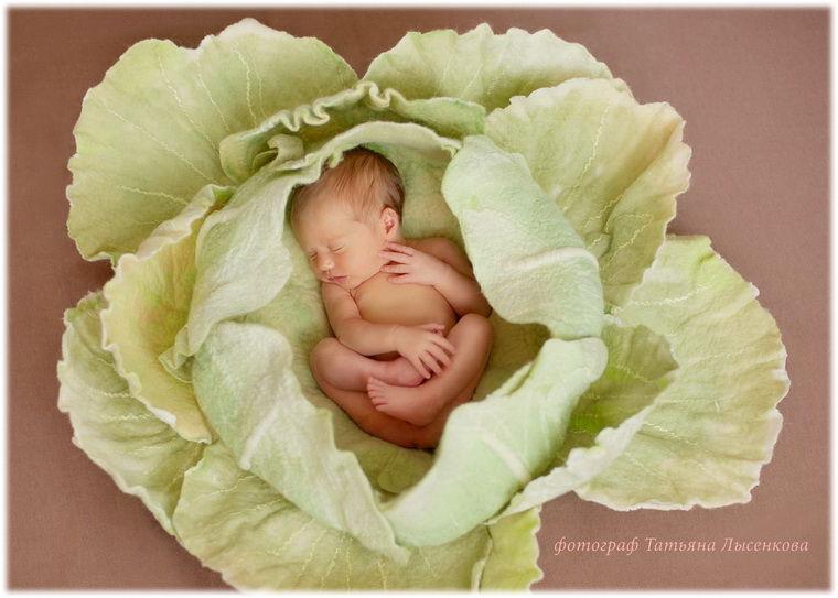 Обыкновенное чудо: капуста из войлока для фотосессии малыша