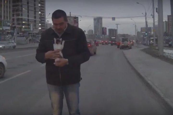 В Новосибирске водитель спас котенка на дороге