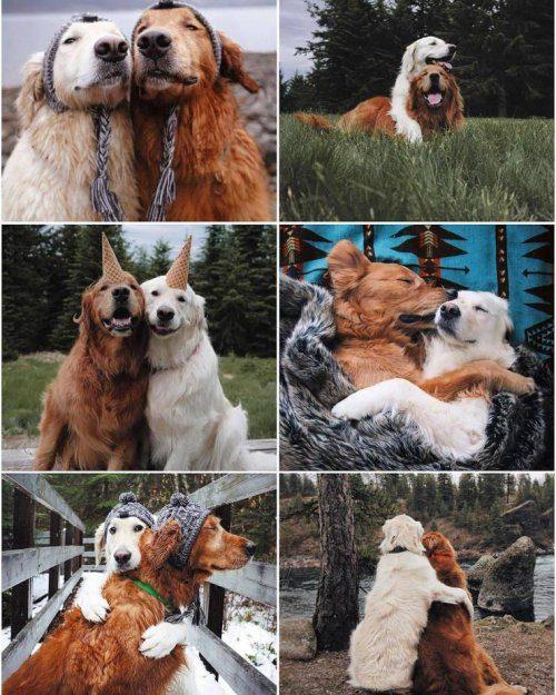Хорошие эмоции и настроение в прикольных фотографиях
