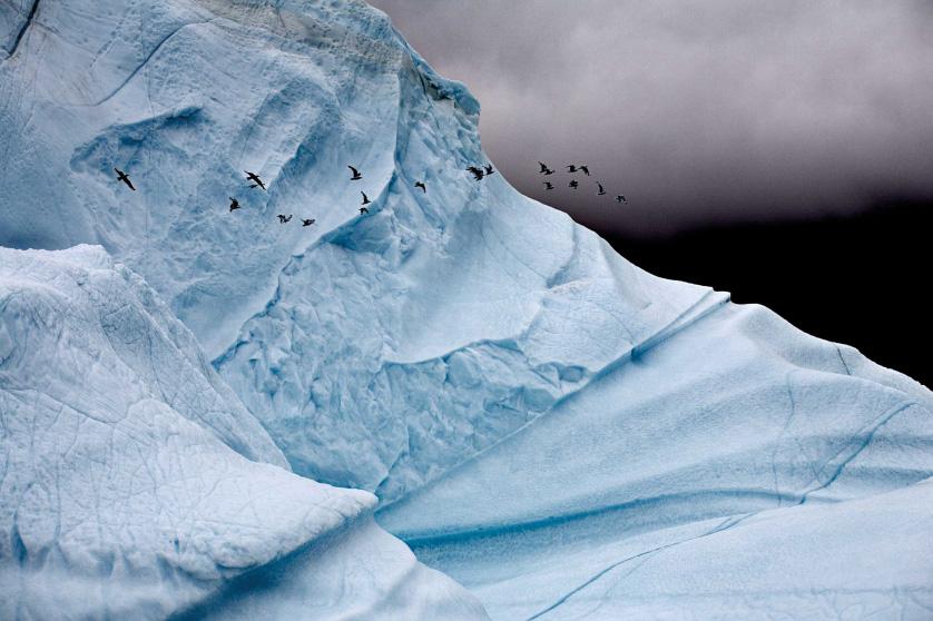 Как выглядят таящие айсберги. Глыбы льда посреди океана Пространство