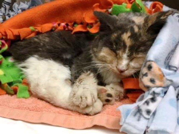 Кошка, найденная «примерзшей к земле», возвращается к жизни