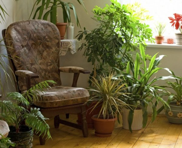 indoor-plants-002