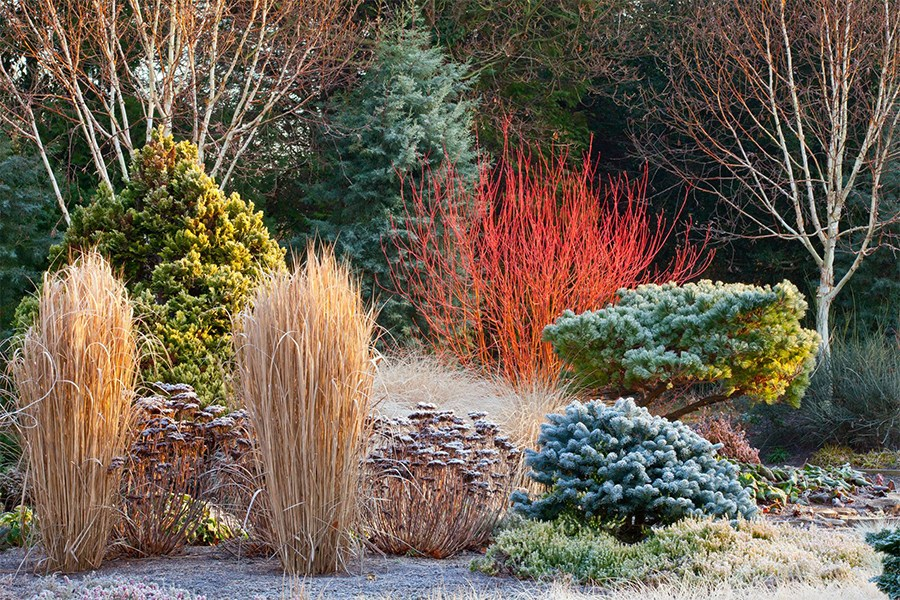 Устройство зимнего сада — не…