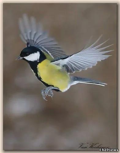 Птички - аппликации крючком. Схемы