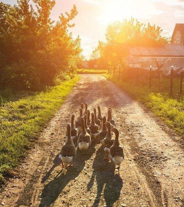 Какое было лето в деревне