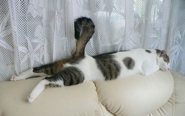 Самые смешные спящие котики для поднятия настроения