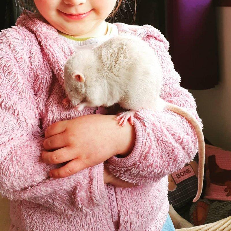 3. У кого же из нас не было грызуна? животные, животные и дети, кошки, питомцы, собаки, фото