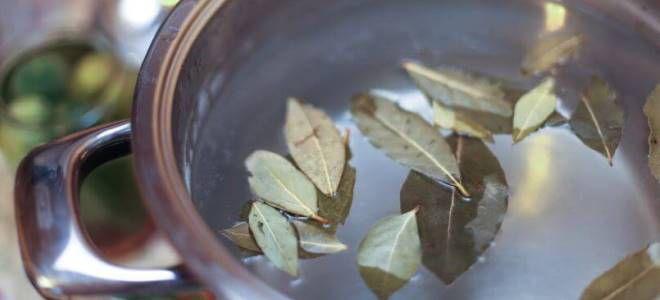 как приготовить отвар из лаврового листа
