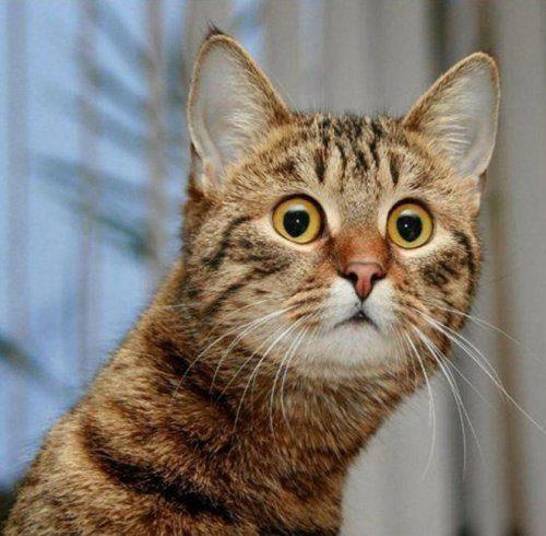Когда мяукаешь кошке в ответ