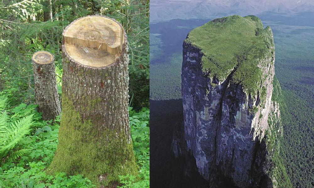 """""""На Земле лесов нет!""""  -  это почти доказано..."""