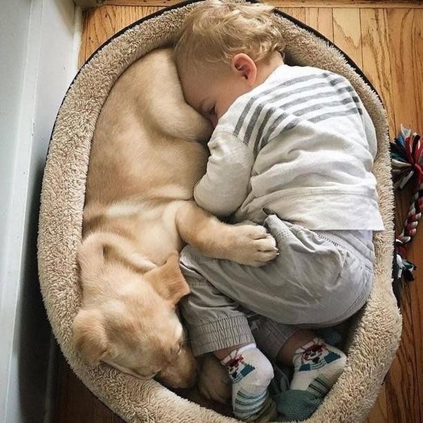 6. Всегда вместе животные, животные и дети, кошки, питомцы, собаки, фото