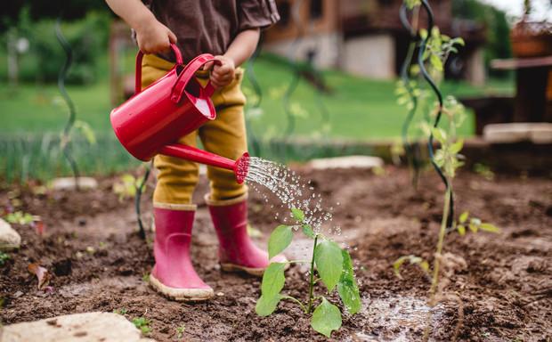 Когда категорически нельзя сажать и сеять: народные приметы дача,огород,полезные советы,сад