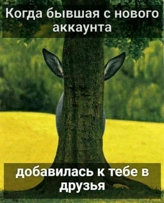 https://mtdata.ru/u1/photo513C/20062232839-0/original.jpeg#20062232839