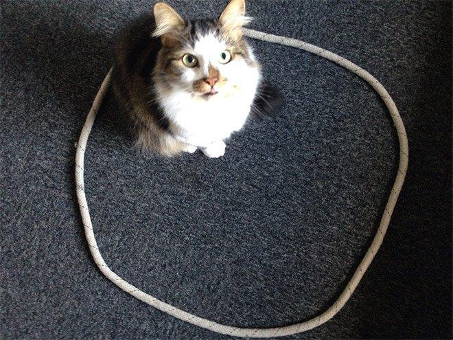 А вы знали, что коты все время лезут в круг