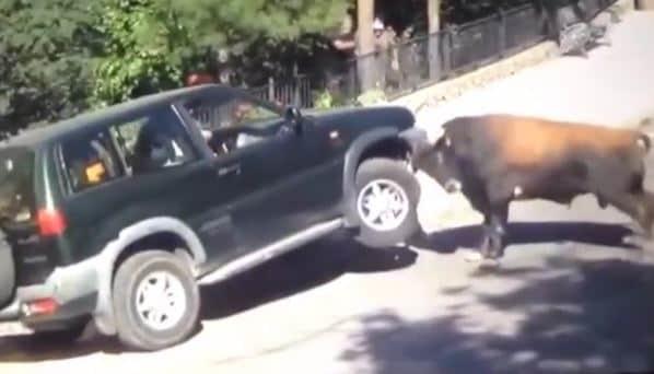 4. Машина vs. Бык животные, природа, ужас