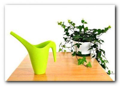 МИР РАСТЕНИЙ.Закон выращивания комнатных растений (4)