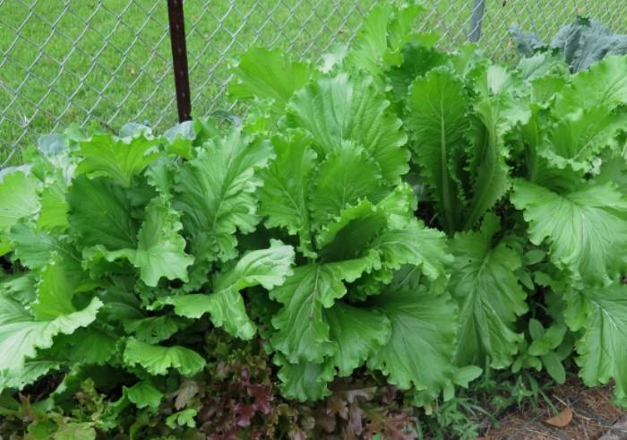 Что выращивали на Руси, пока не появились помидоры с картошкой дача,сад и огород