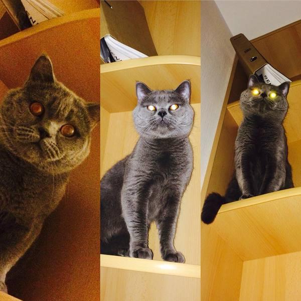Мистика и страшилки от кота с лампой