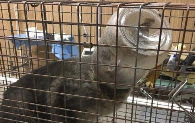 Шокирующие истории о котиках, которых пришлось спасать из весьма странных мест. Часть 2