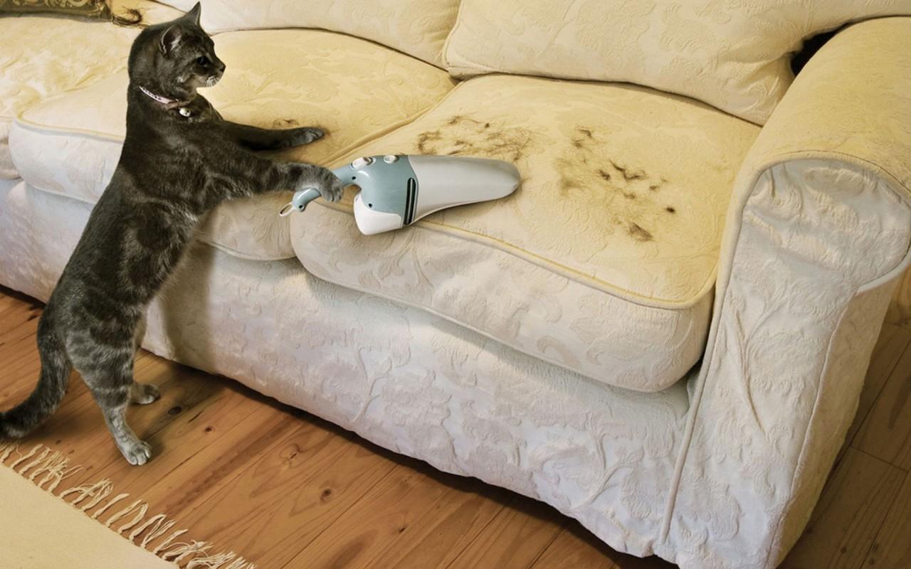Как отучить кота портить обои и мебель