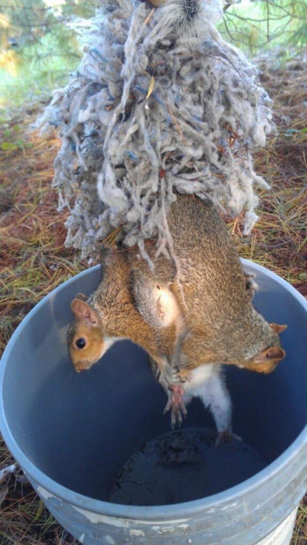 """""""Что за карусель в дупле?"""" Парень заглянул внутрь дерева и увидел клубок изоляционного волокна с… лапами и хвостами"""