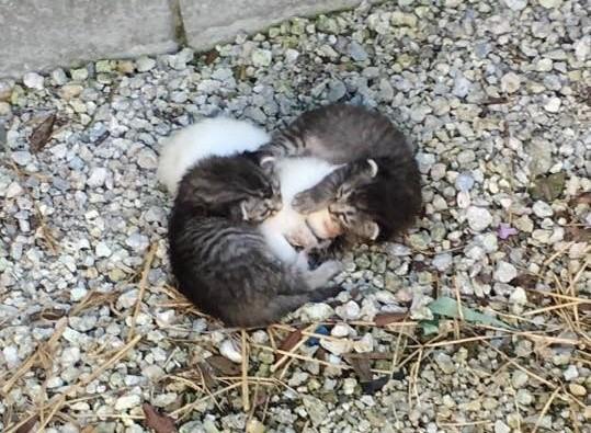Бездомные котята старательно защищали сестренку от холода