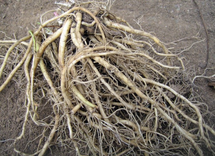 Почему чернеют и сохнут края листьев у комнатных растений