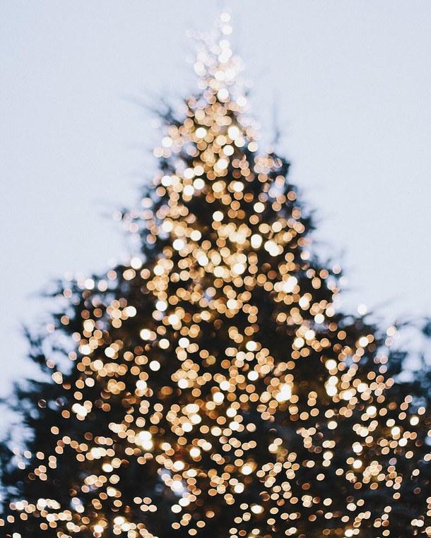 Инстаграм недели: новогодние елки