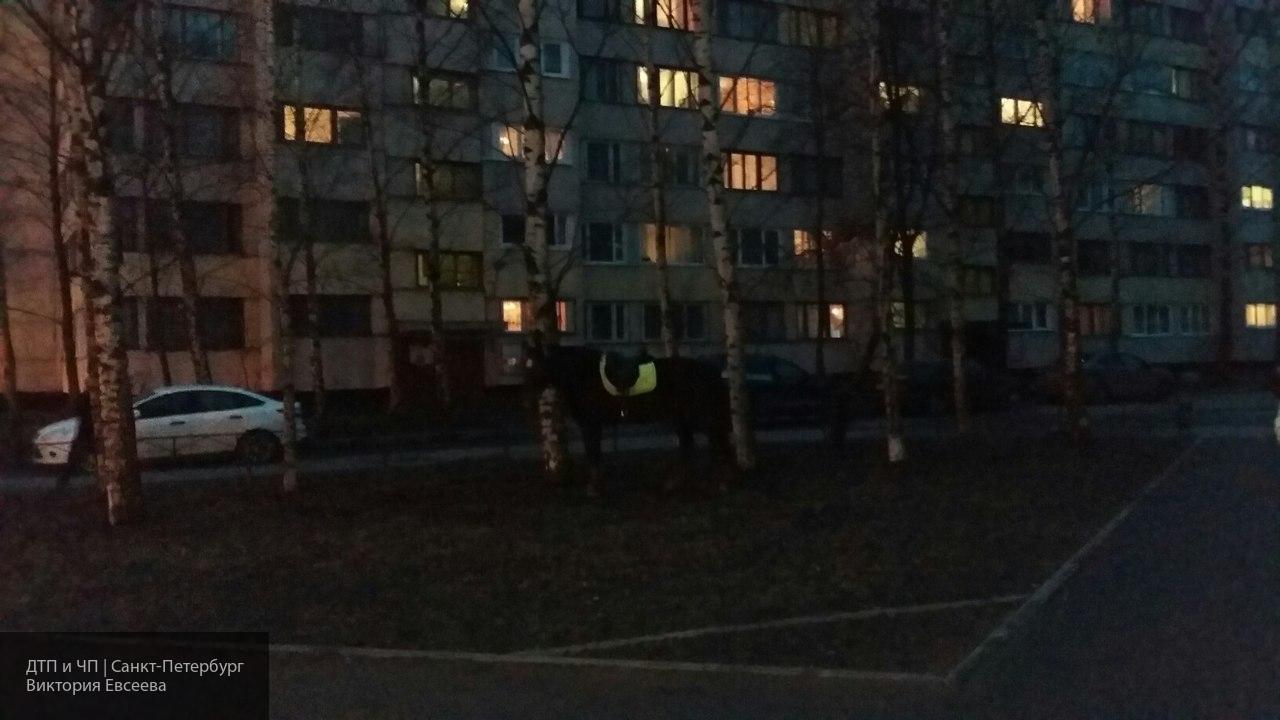 Девушка оставила коня в одном из дворов Санкт-Петербурга