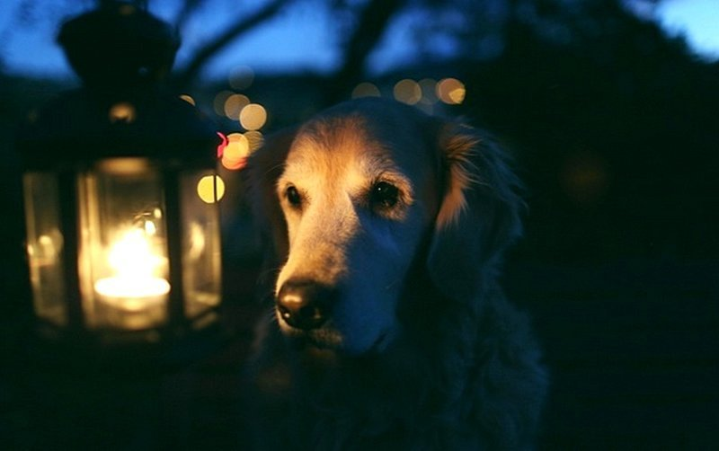 Как Дед и три его Лайки проучили дурака и его немецкую овчарку байка, история, собаки, сосед