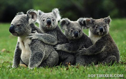 Обманчиво милые создания животные,опасности,природа